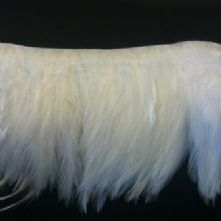 Ivory Full Hackle